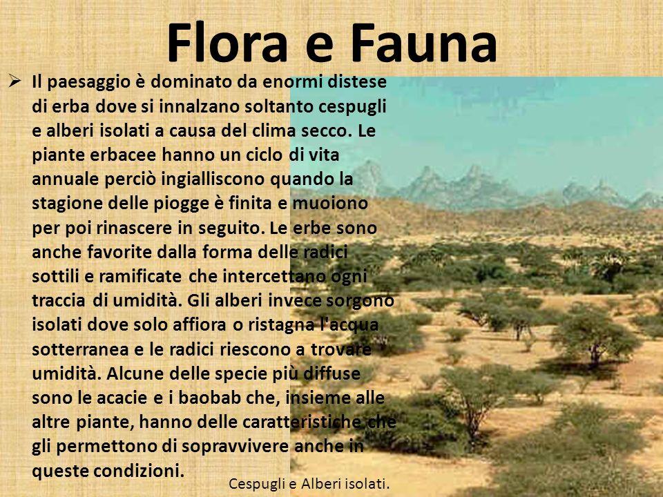 Flora e Fauna Il paesaggio è dominato da enormi distese di erba dove si innalzano soltanto cespugli e alberi isolati a causa del clima secco. Le piant