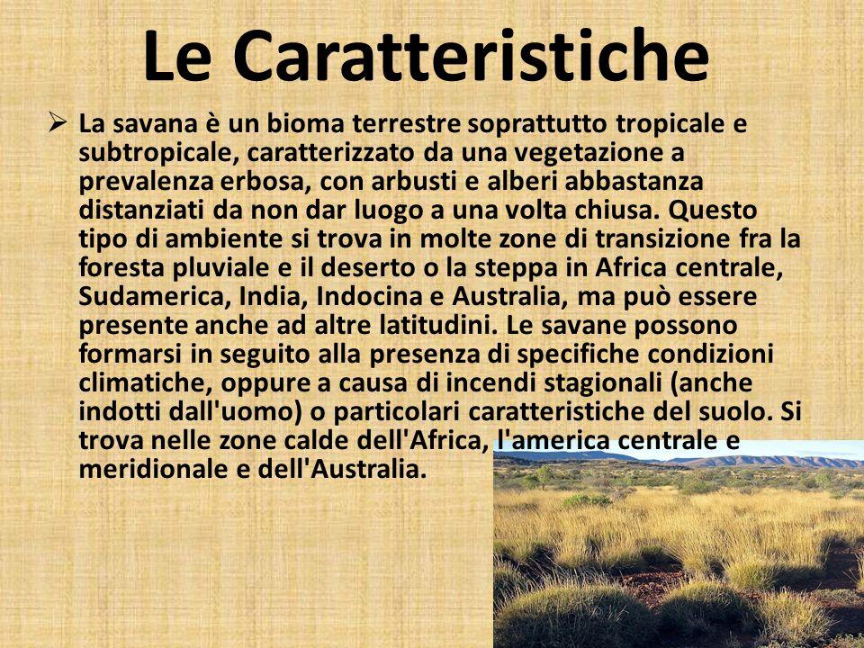 Le Caratteristiche La savana è un bioma terrestre soprattutto tropicale e subtropicale, caratterizzato da una vegetazione a prevalenza erbosa, con arb