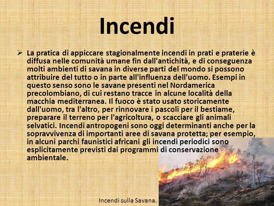 Incendi La pratica di appiccare stagionalmente incendi in prati e praterie è diffusa nelle comunità umane fin dall'antichità, e di conseguenza molti a