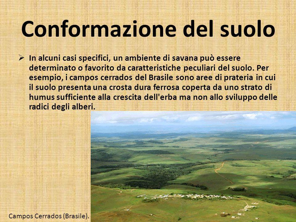 Conformazione del suolo In alcuni casi specifici, un ambiente di savana può essere determinato o favorito da caratteristiche peculiari del suolo. Per