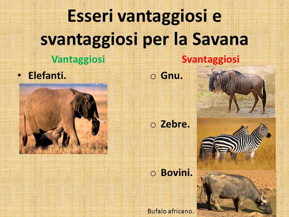 Esseri vantaggiosi e svantaggiosi per la Savana Vantaggiosi Elefanti. Svantaggiosi o Gnu. o Zebre. o Bovini. Bufalo africano.