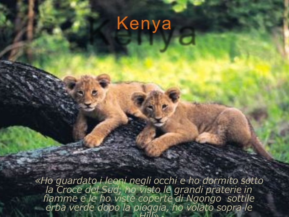 Kenya «Ho guardato i leoni negli occhi e ho dormito sotto la Croce del Sud, ho visto le grandi praterie in fiamme e le ho viste coperte di Ngongo sottile erba verde dopo la pioggia, ho volato sopra le Hill»