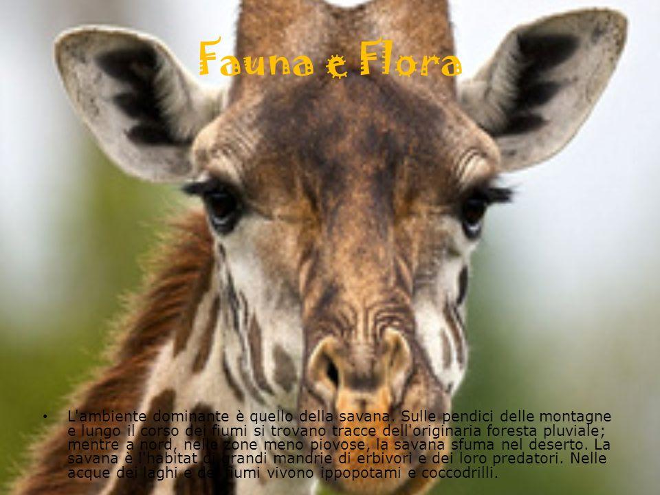 Fauna e Flora L ambiente dominante è quello della savana.