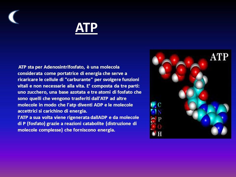 ATP ATP sta per Adenosintrifosfato, è una molecola considerata come portatrice di energia che serve a ricaricare le cellule di carburante per svolgere funzioni vitali e non necessarie alla vita.