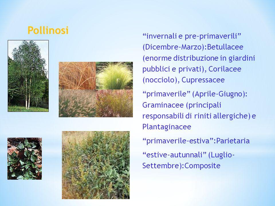 Pollinosi invernali e pre-primaverili (Dicembre-Marzo):Betullacee (enorme distribuzione in giardini pubblici e privati), Corilacee (nocciolo), Cupress