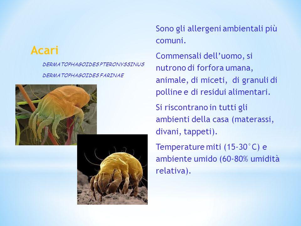 Acari Sono gli allergeni ambientali più comuni. Commensali delluomo, si nutrono di forfora umana, animale, di miceti, di granuli di polline e di resid