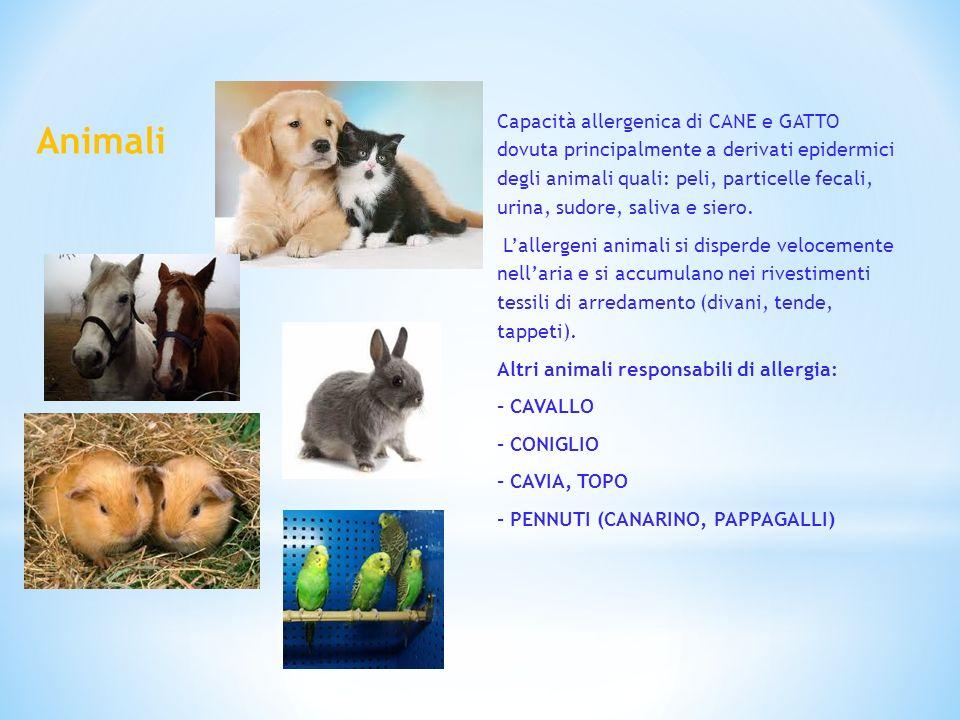 Capacità allergenica di CANE e GATTO dovuta principalmente a derivati epidermici degli animali quali: peli, particelle fecali, urina, sudore, saliva e