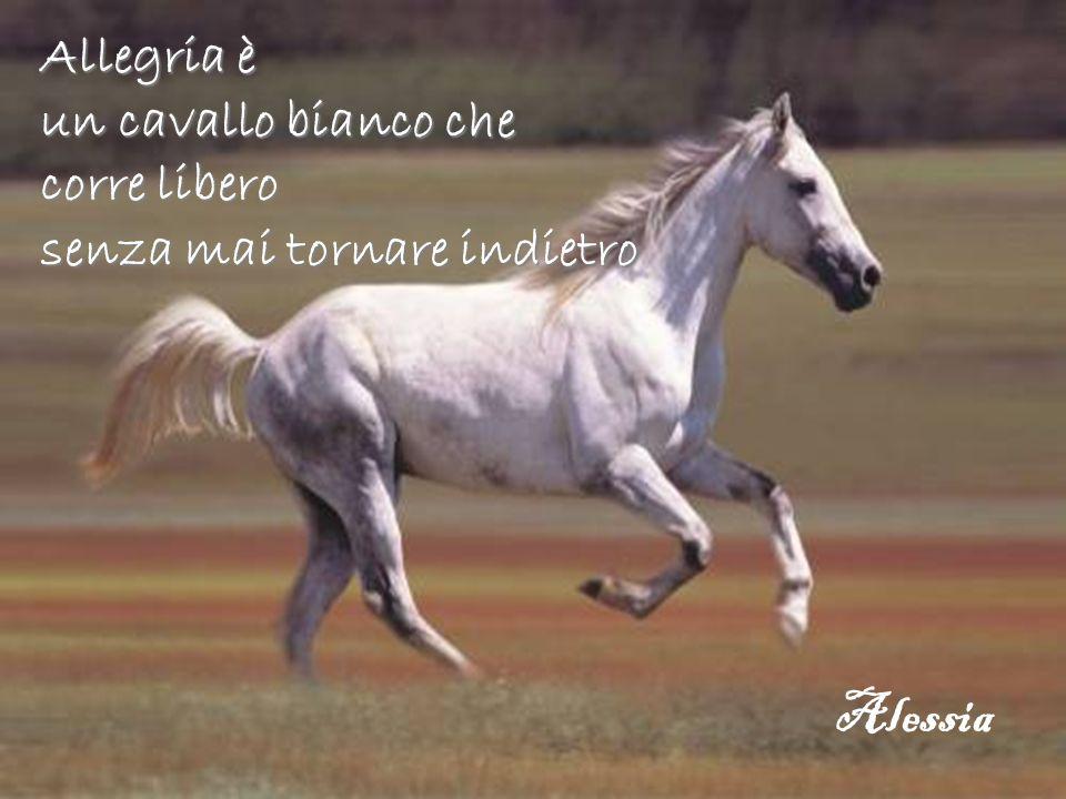 Allegria è un cavallo bianco che corre libero senza mai tornare indietro Alessia