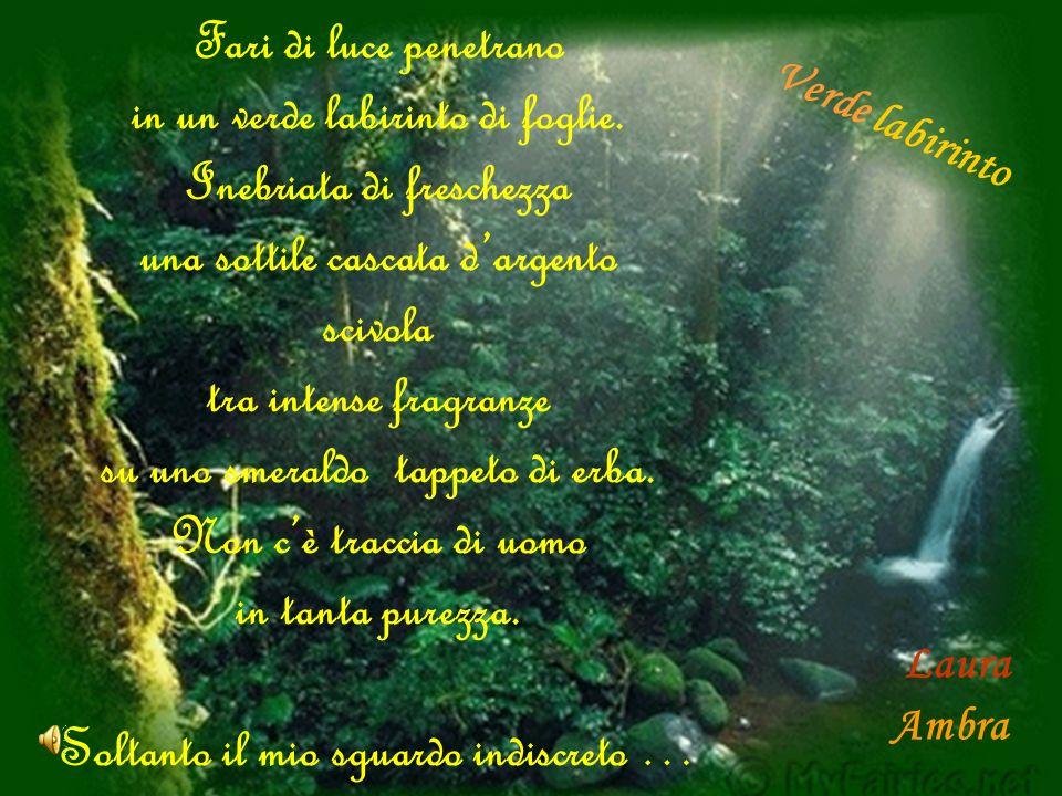 Fari di luce penetrano in un verde labirinto di foglie. Inebriata di freschezza una sottile cascata dargento scivola tra intense fragranze su uno smer
