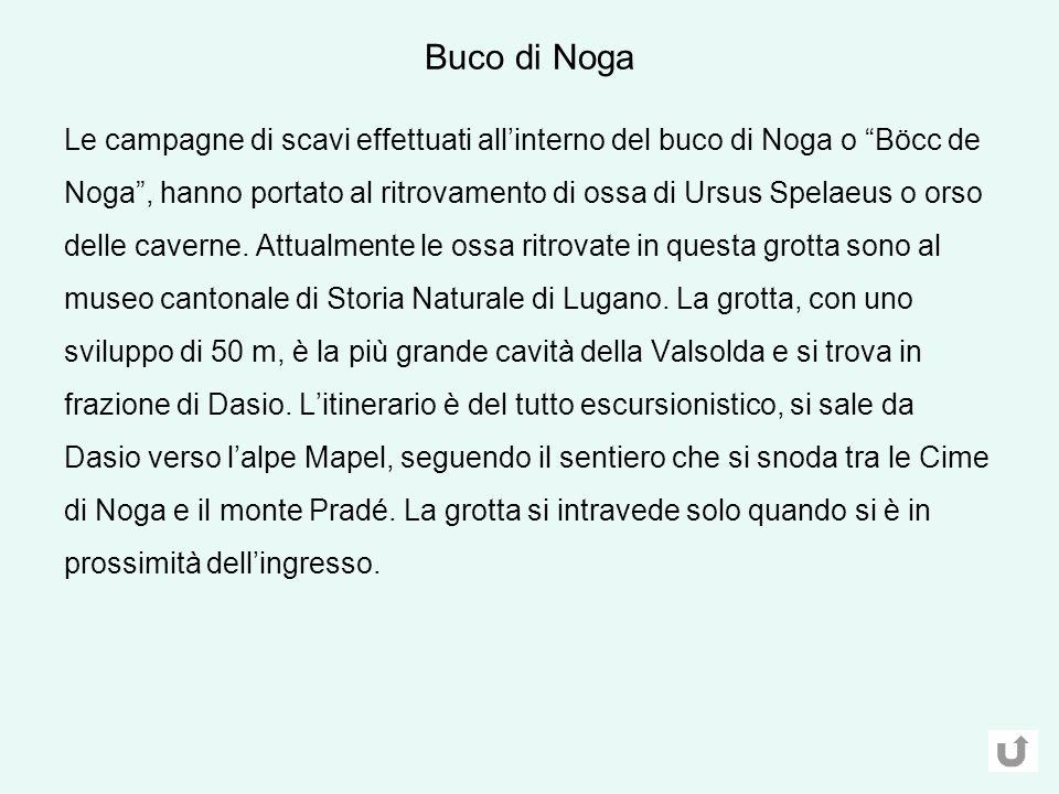 Le campagne di scavi effettuati allinterno del buco di Noga o Böcc de Noga, hanno portato al ritrovamento di ossa di Ursus Spelaeus o orso delle caverne.