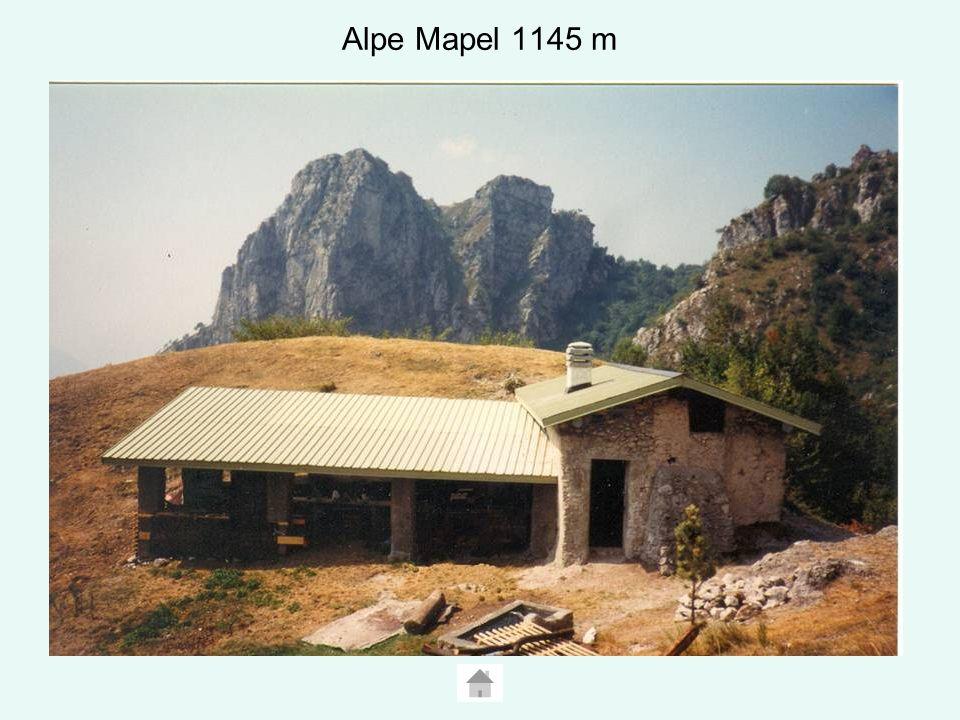 Alpe Mapel 1145 m