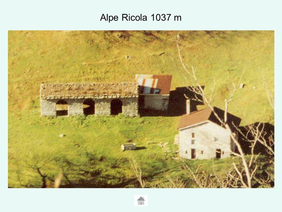 Alpe Ricola 1037 m