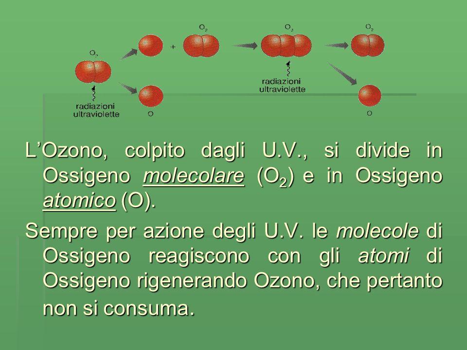 LOzono, colpito dagli U.V., si divide in Ossigeno molecolare (O 2 ) e in Ossigeno atomico (O).
