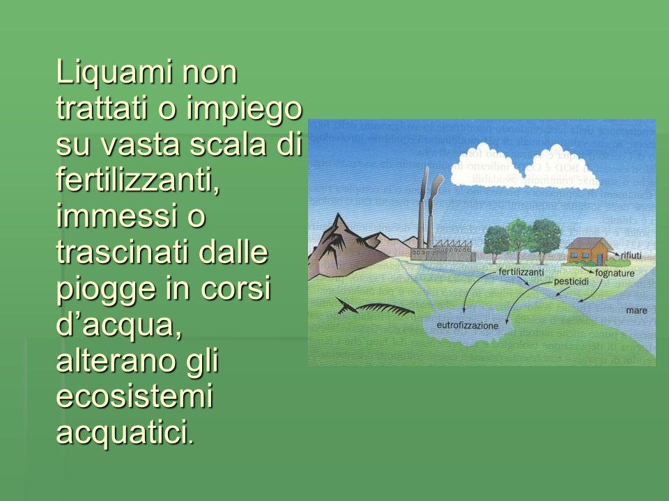 Liquami non trattati o impiego su vasta scala di fertilizzanti, immessi o trascinati dalle piogge in corsi dacqua, alterano gli ecosistemi acquatici.