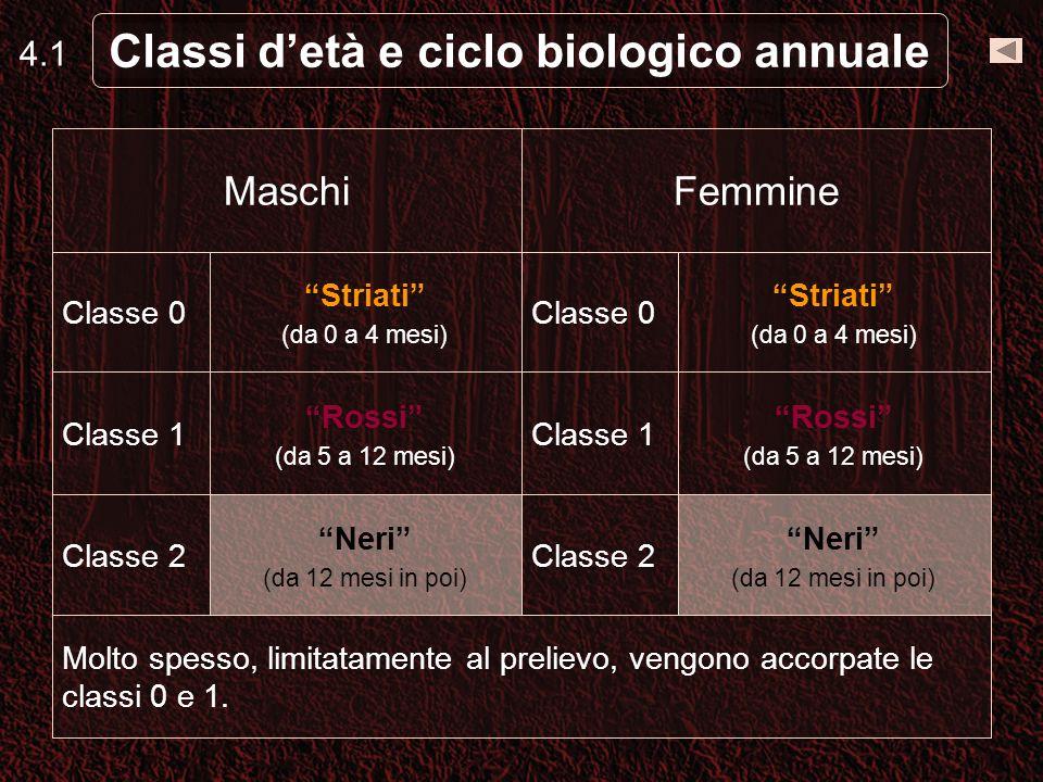 4.1 Classi detà e ciclo biologico annuale Molto spesso, limitatamente al prelievo, vengono accorpate le classi 0 e 1.