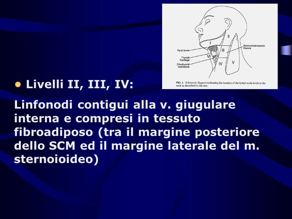 Livelli II, III, IV: Linfonodi contigui alla v. giugulare interna e compresi in tessuto fibroadiposo (tra il margine posteriore dello SCM ed il margin