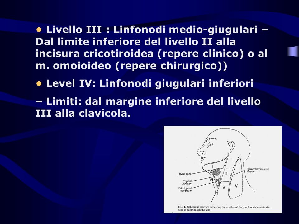 Livello III : Linfonodi medio-giugulari – Dal limite inferiore del livello II alla incisura cricotiroidea (repere clinico) o al m. omoioideo (repere c
