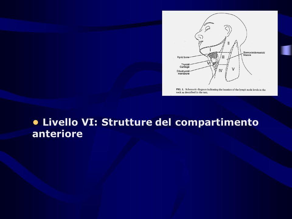 Livello VI: Strutture del compartimento anteriore