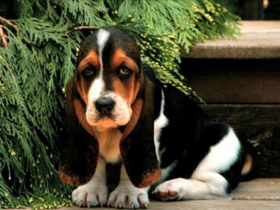 L'80% dei cani abbandonati muore in incidenti stradali, subisce maltrattamenti o è vittima dell'addestramento dei cani da combattimento, il resto tras