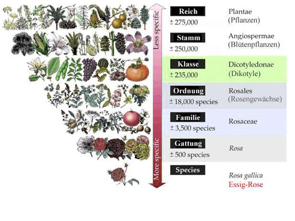 isotopie Istotopia è la ricorrenza in un testo di semi, o categorie semiche.