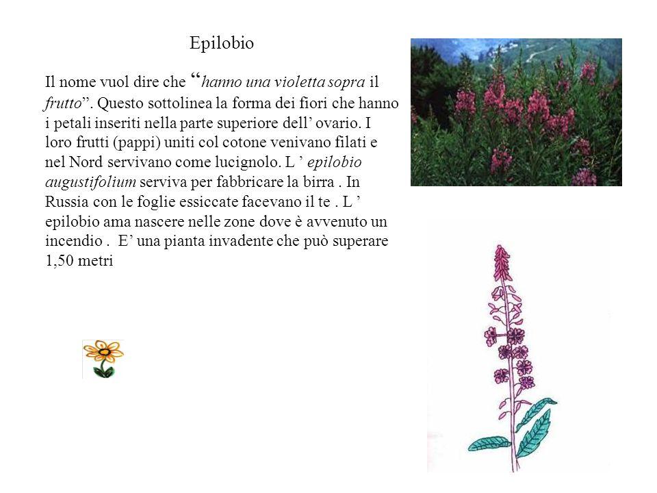 FELCE E una pianta che non produce fiori ma emette spore nella pagina inferiore delle foglie per riprodursi..Ama le zone luminose, il terreno umido. R