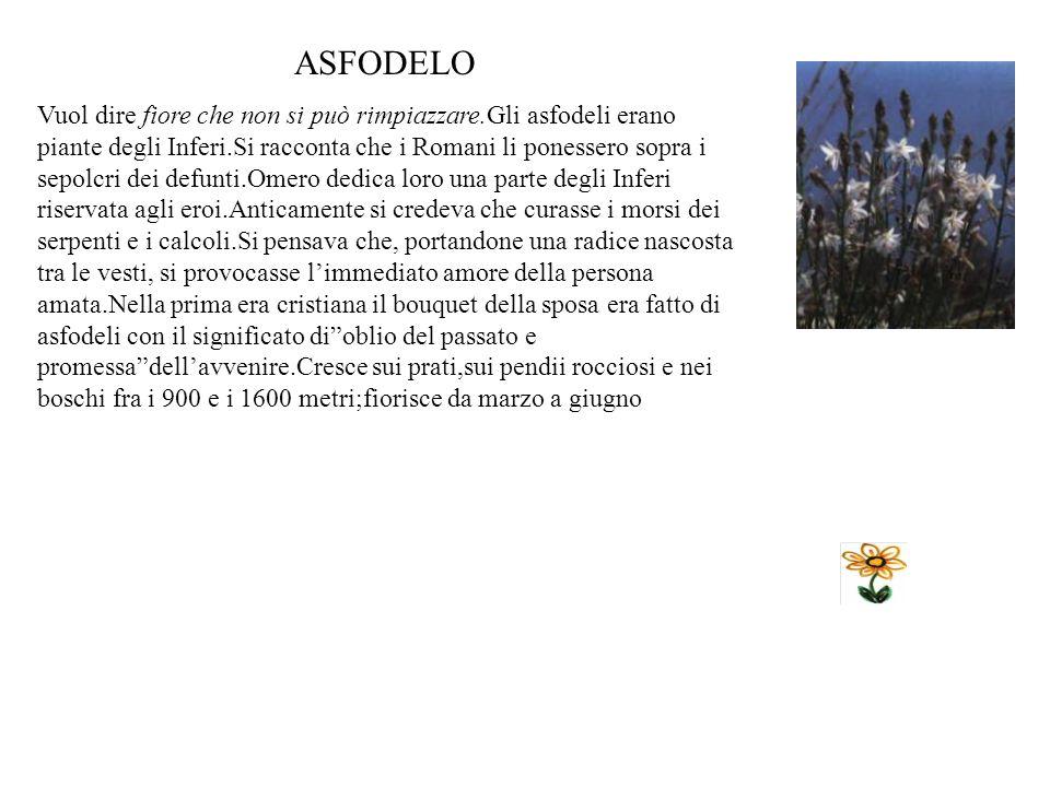 PAPAVERO Presso i Romani era dedicato a Morfeo, dio del sonno, e a Cerere, dea delle messi che veniva spesso raffigurata con questo fiore.Sostituirono