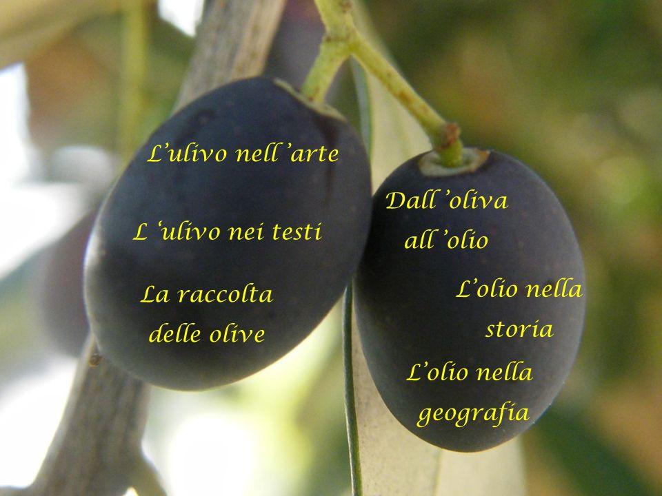 Dall oliva all olio L ulivo nei testi Lulivo nell arte Lolio nella geografia Lolio nella storia La raccolta delle olive