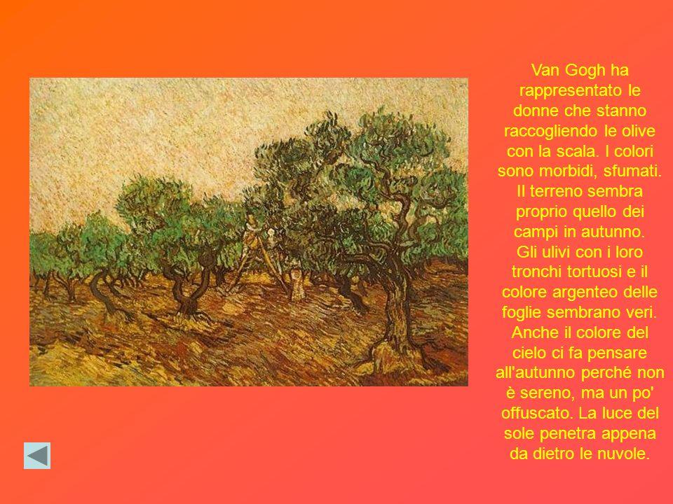 Van Gogh ha rappresentato le donne che stanno raccogliendo le olive con la scala.