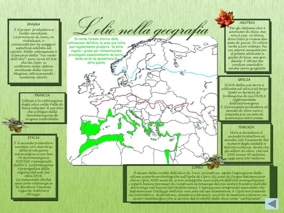 Lulivo L ulivo è una pianta da frutto sempreverde che cresce soprattutto in collina per la sua capacità di assorbire e trattenere lacqua anche in un t