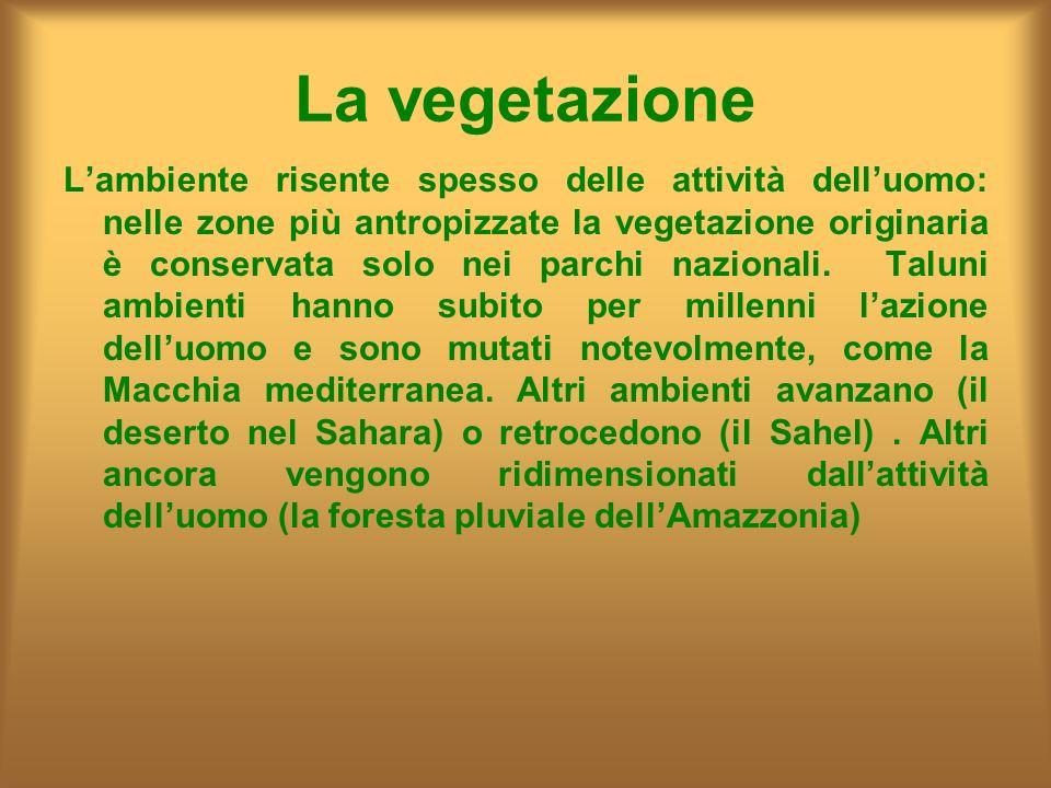 La vegetazione Lambiente risente spesso delle attività delluomo: nelle zone più antropizzate la vegetazione originaria è conservata solo nei parchi na
