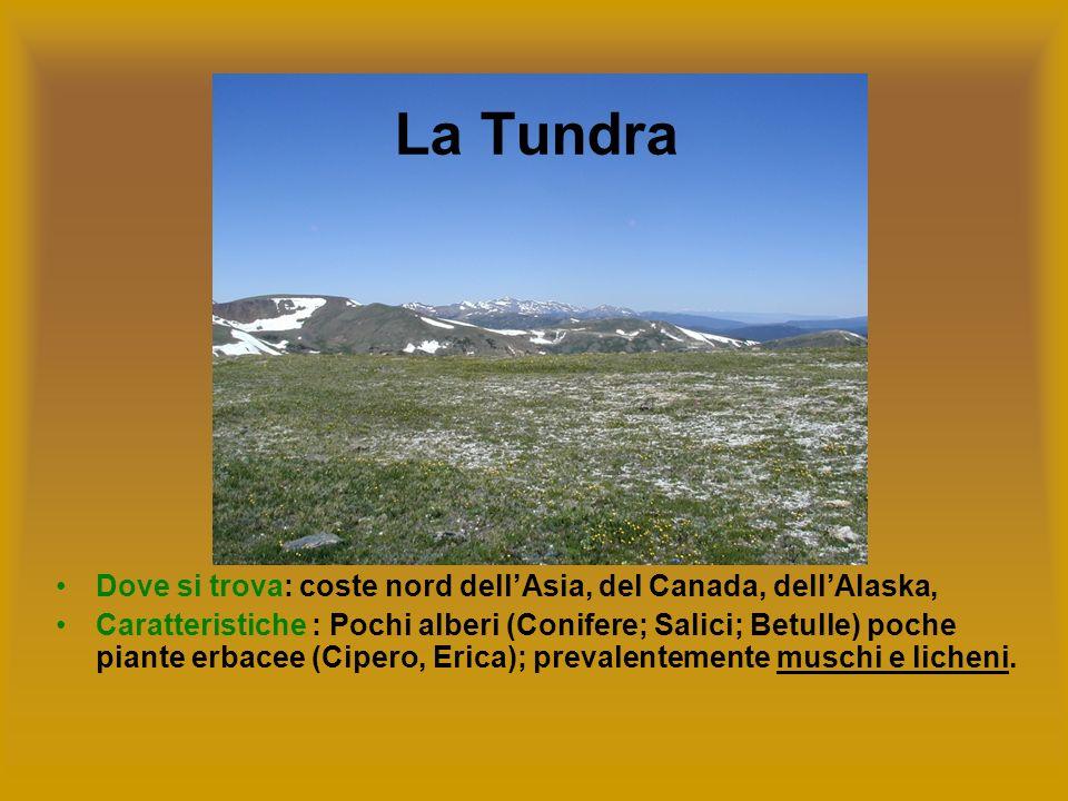 Dove si trova: coste nord dellAsia, del Canada, dellAlaska, Caratteristiche : Pochi alberi (Conifere; Salici; Betulle) poche piante erbacee (Cipero, E
