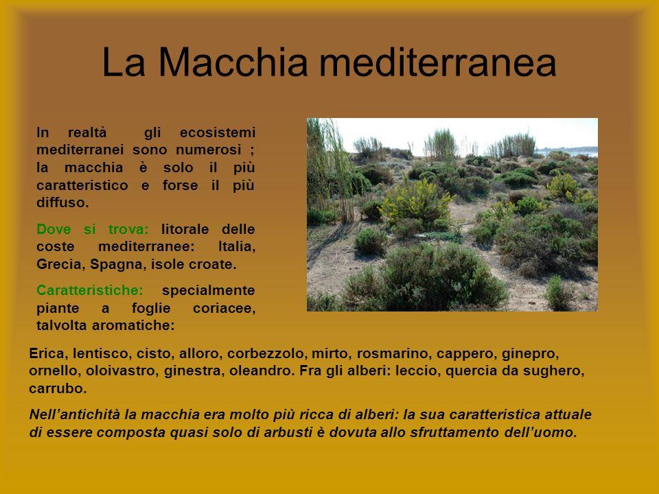 La Macchia mediterranea In realtà gli ecosistemi mediterranei sono numerosi ; la macchia è solo il più caratteristico e forse il più diffuso. Dove si