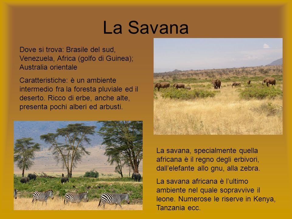 La Savana Dove si trova: Brasile del sud, Venezuela, Africa (golfo di Guinea); Australia orientale Caratteristiche: è un ambiente intermedio fra la fo