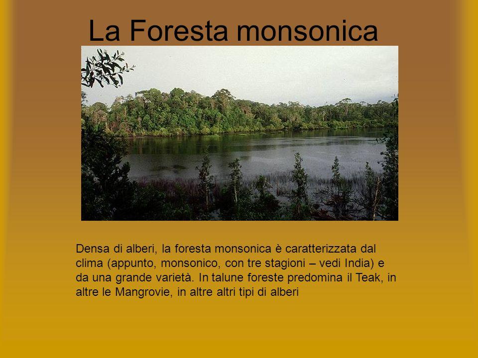 La Foresta monsonica Densa di alberi, la foresta monsonica è caratterizzata dal clima (appunto, monsonico, con tre stagioni – vedi India) e da una gra