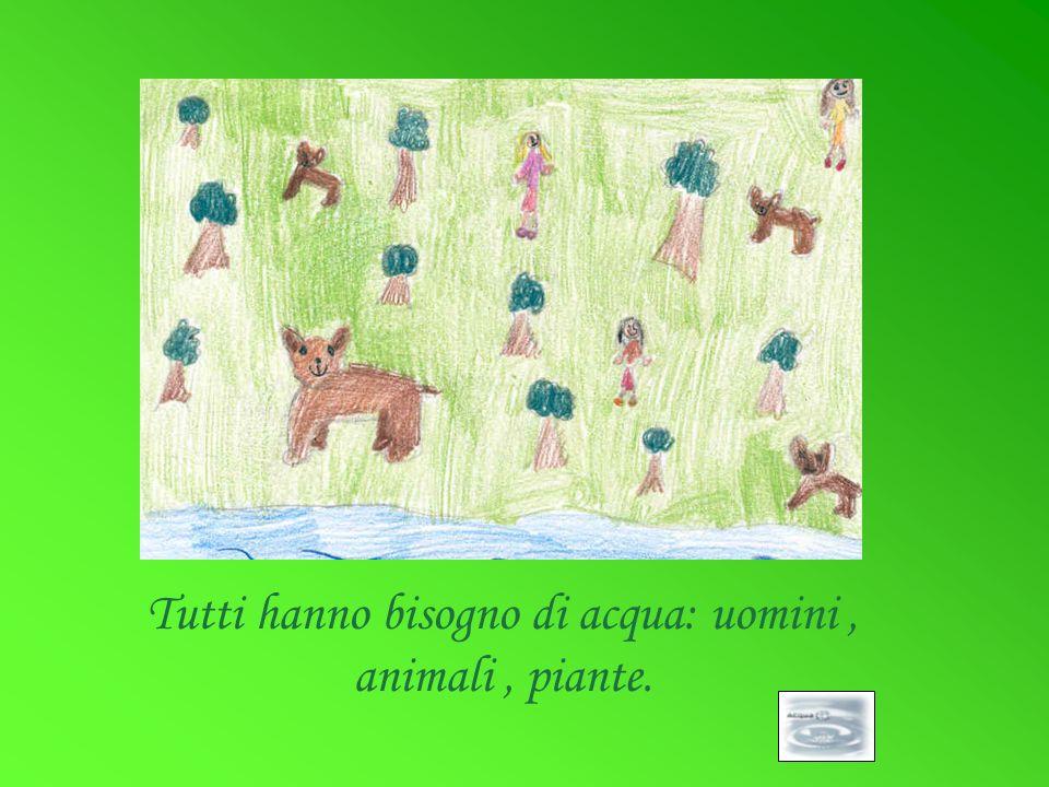 Tutti hanno bisogno di acqua: uomini, animali, piante.