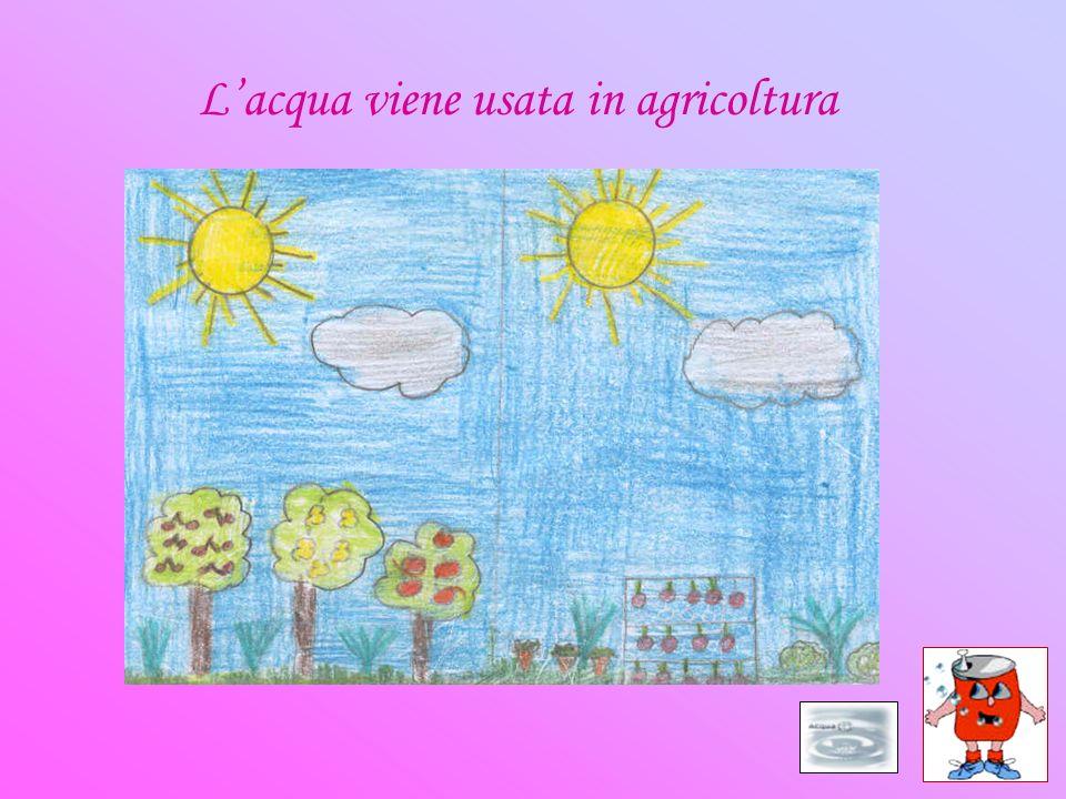 Lacqua viene usata in agricoltura