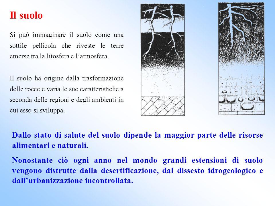 Il suolo Si può immaginare il suolo come una sottile pellicola che riveste le terre emerse tra la litosfera e latmosfera. Il suolo ha origine dalla tr