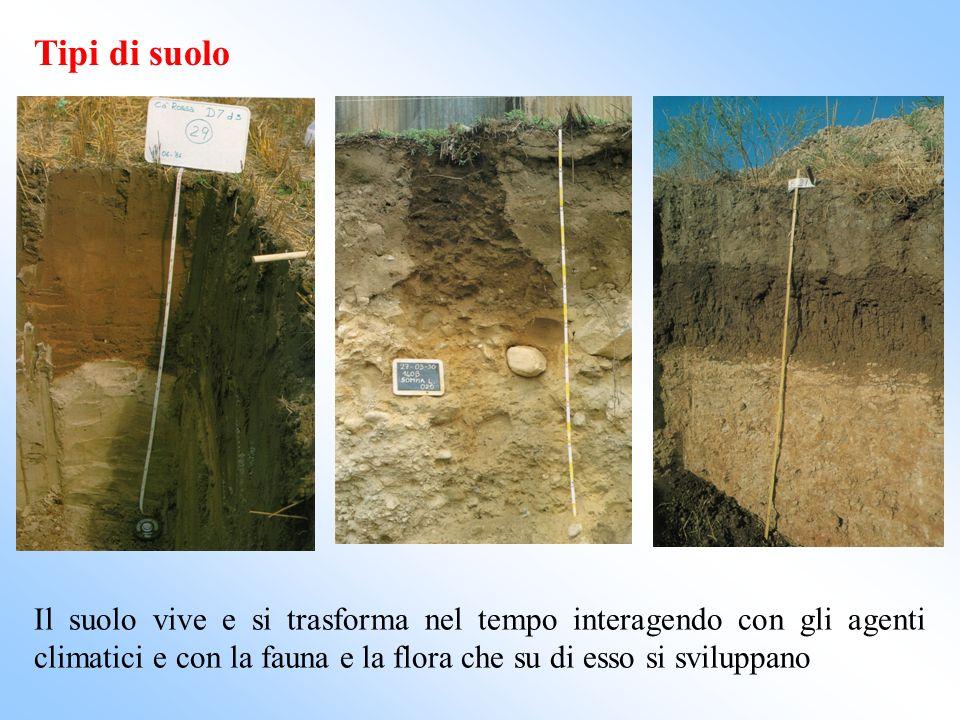Tipi di suolo Il suolo vive e si trasforma nel tempo interagendo con gli agenti climatici e con la fauna e la flora che su di esso si sviluppano