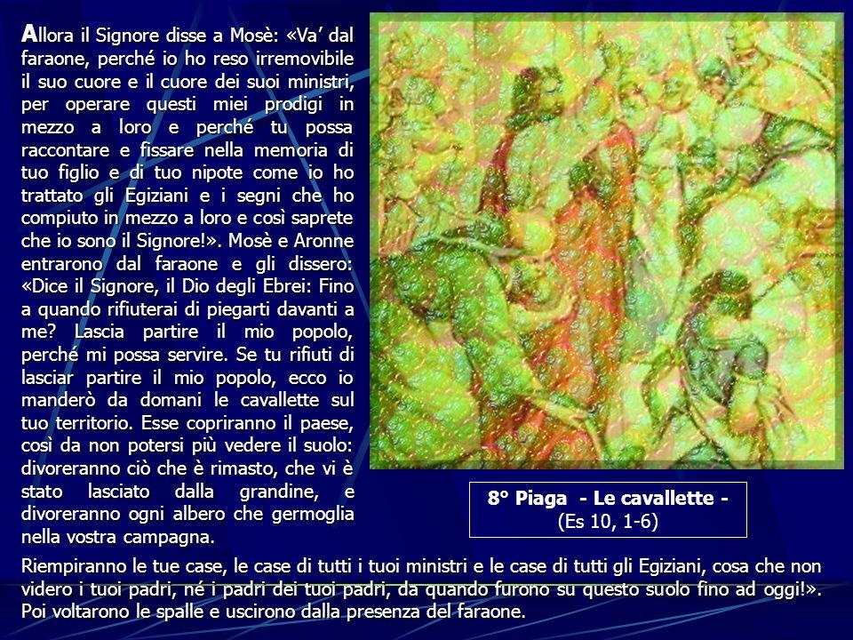 8° Piaga - Le cavallette - (Es 10, 1-6) A llora A llora il Signore disse a Mosè: «Va dal faraone, perché io ho reso irremovibile il suo cuore e il cuo
