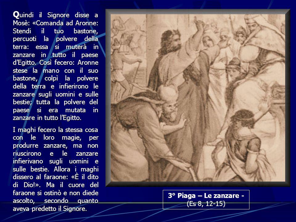 3° Piaga – Le zanzare - (Es 8, 12-15) Q uindi Q uindi il Signore disse a Mosè: «Comanda ad Aronne: Stendi il tuo bastone, percuoti la polvere della te