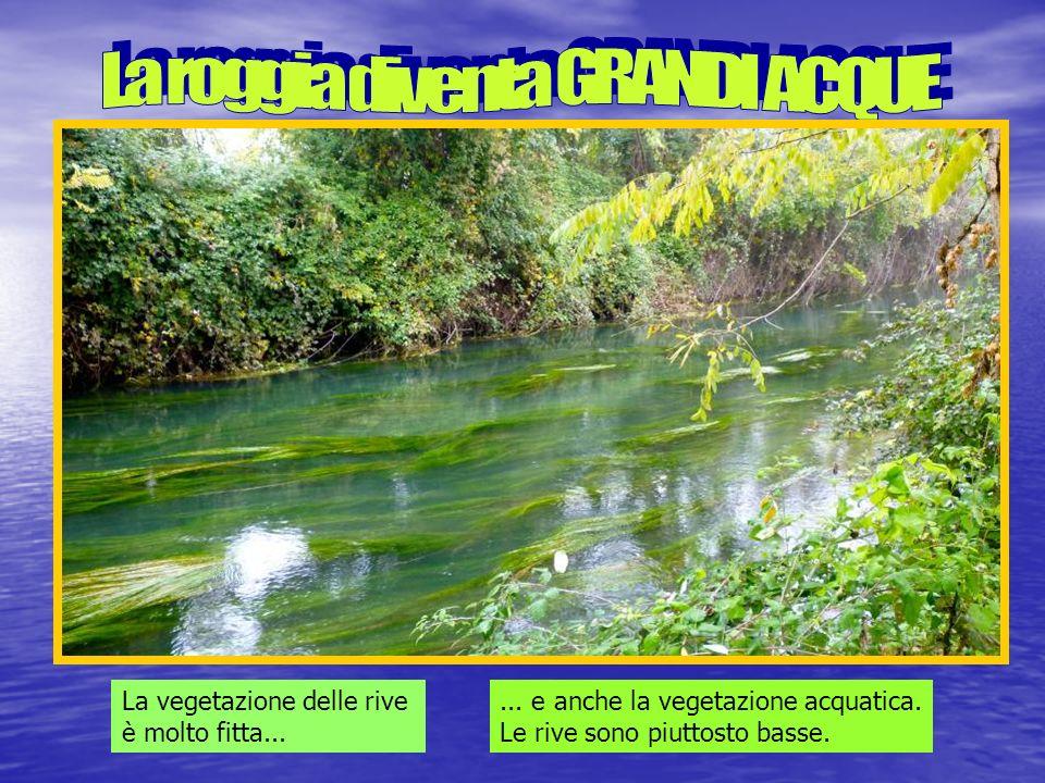 La vegetazione delle rive è molto fitta......e anche la vegetazione acquatica.