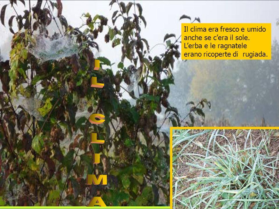 Il clima era fresco e umido anche se cera il sole. Lerba e le ragnatele erano ricoperte di rugiada.