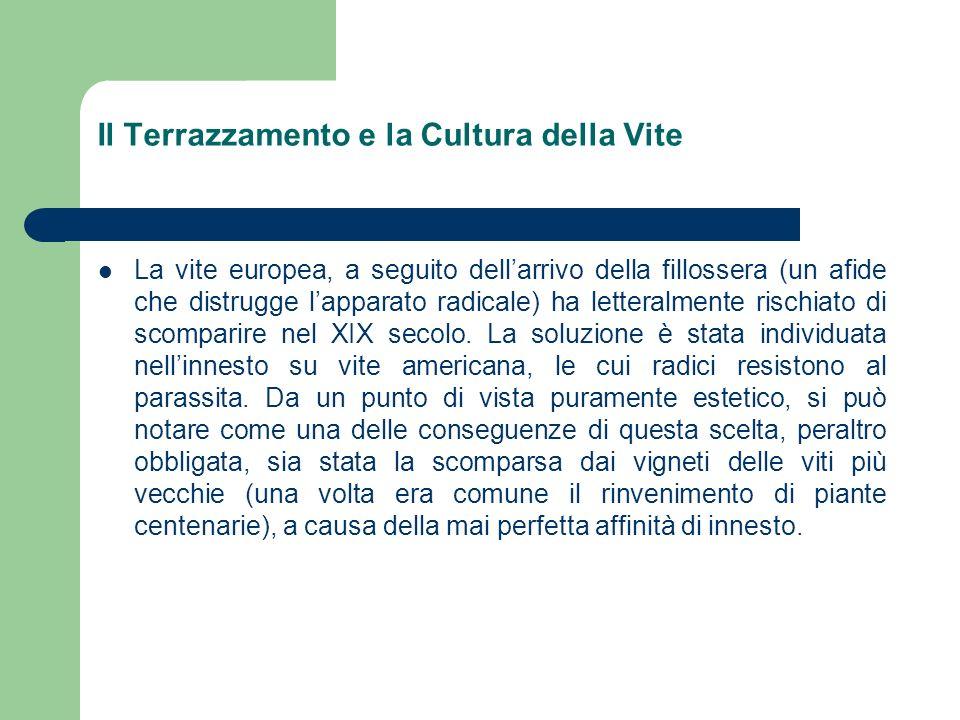 Il Terrazzamento e la Cultura della Vite La vite europea, a seguito dellarrivo della fillossera (un afide che distrugge lapparato radicale) ha lettera