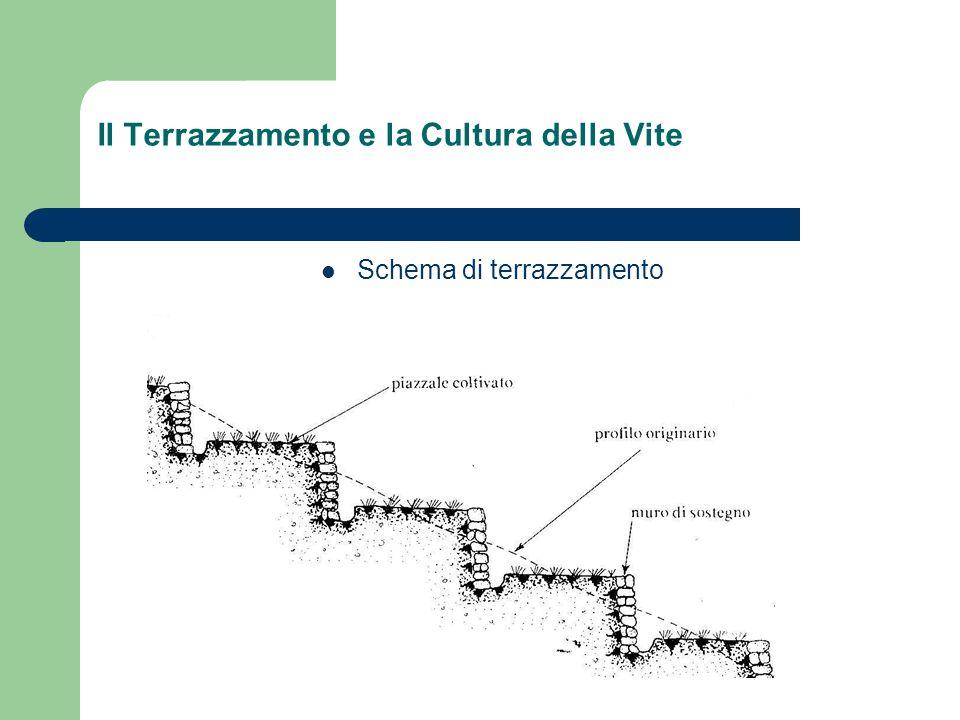 Il Terrazzamento e la Cultura della Vite Schema di terrazzamento
