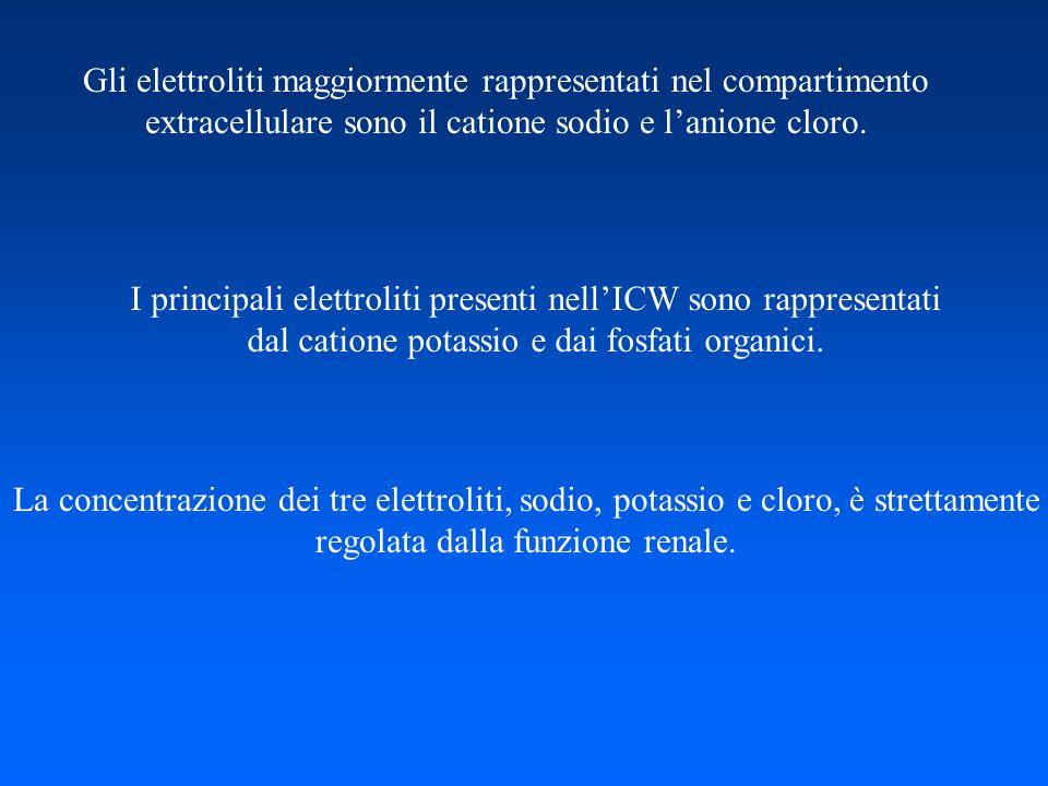 Gli elettroliti maggiormente rappresentati nel compartimento extracellulare sono il catione sodio e lanione cloro. I principali elettroliti presenti n