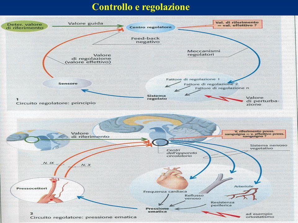 6.Classificazione eziologica: 1. Emorragico 2. Cardiaco (cardiogenico + ostruttivo) 3.