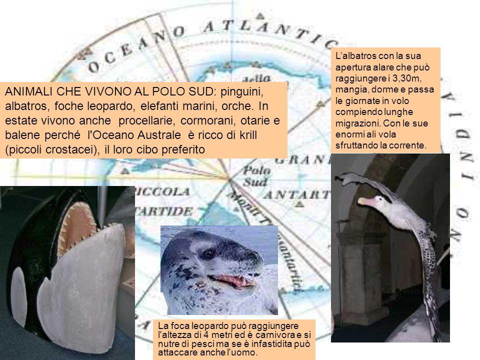 La foca leopardo può raggiungere l'altezza di 4 metri ed è carnivora e si nutre di pesci ma se è infastidita può attaccare anche l'uomo. ANIMALI CHE V