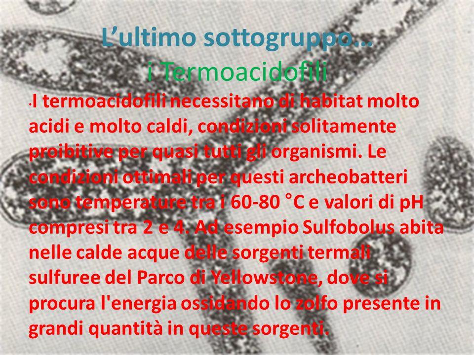 Lultimo sottogruppo… i Termoacidofili I termoacidofili necessitano di habitat molto acidi e molto caldi, condizioni solitamente proibitive per quasi tutti gli organismi.