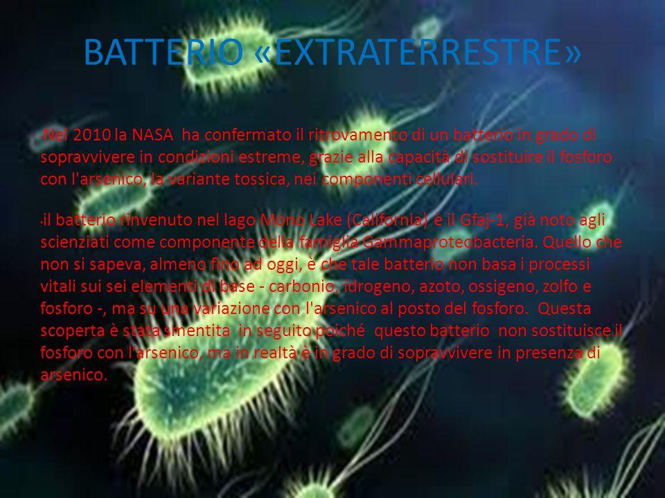 BATTERIO «EXTRATERRESTRE» Nel 2010 la NASA ha confermato il ritrovamento di un batterio in grado di sopravvivere in condizioni estreme, grazie alla capacità di sostituire il fosforo con l arsenico, la variante tossica, nei componenti cellulari.