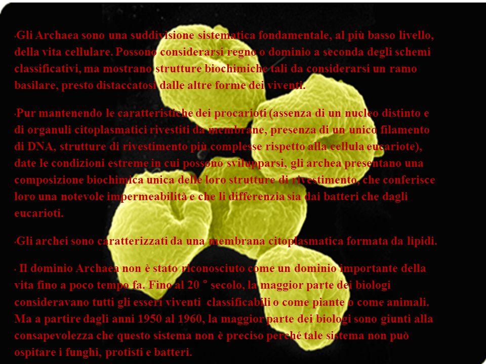 Gli Archaea sono una suddivisione sistematica fondamentale, al più basso livello, della vita cellulare. Possono considerarsi regno o dominio a seconda